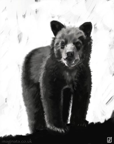 '10 Day Challenge - Animals Day 10 - Black Bear Cub' - Digital Painting