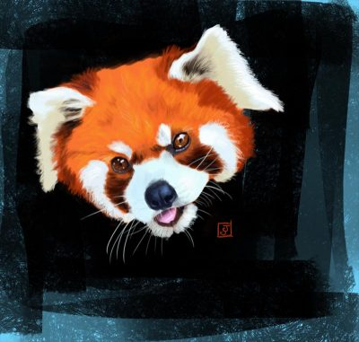 '10 Day Challenge - Animals Day 2 - Red Panda' - Digital Painting