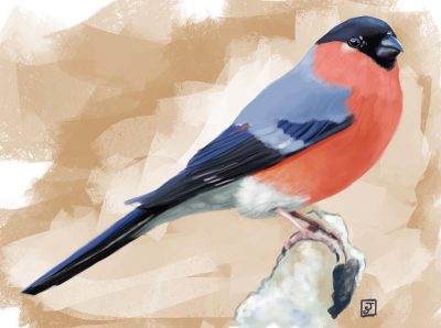 '10 Day Challenge - Animals Day 4 - Bullfinch' - Digital Painting