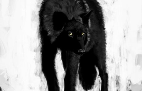 '10 Day Challenge - Animals Day 5 - Black Wolf' - Digital Painting