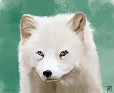 '10 Day Challenge - Animals Day 9 - Arctic Fox' - Digital Painting